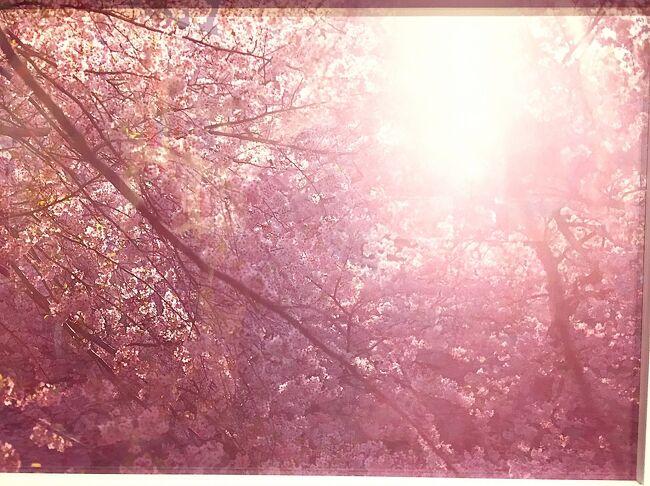 高松市美術館にて大好きな蜷川実花サマの展覧会が開催されているのを知り<br />ちょうど旅行時期と重なったので喜び勇んで鑑賞<br />気になっていた仏生山温泉にも行ってみることにしました