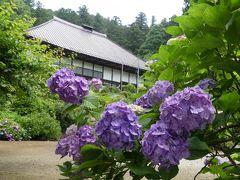 大中寺のアジサイ_2018_だいぶ咲いています。満開間近です。(栃木市・大平町)