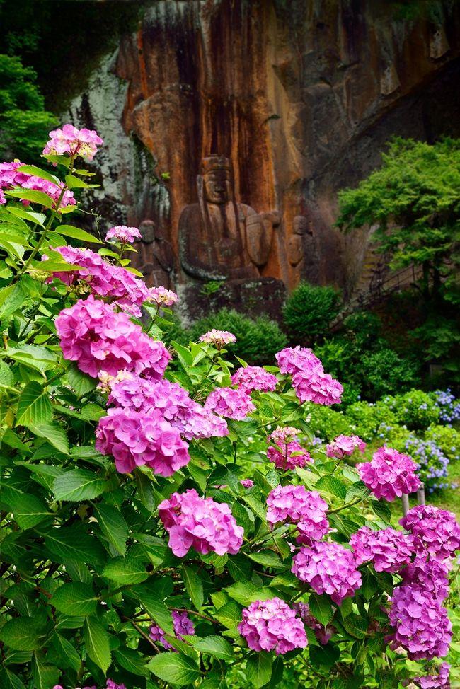 日本一大きな磨崖仏を有する朝地の普光寺へ行ってきました。<br /> 普光寺は大分県一のアジサイ寺としても有名です。