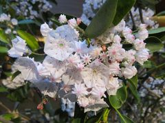 2018春、北関東の名城巡り(10/21):5月22日(10):伊香保温泉で泊まったホテル、伊香保温泉の夜の散策