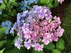 加茂荘花鳥園 紫陽花と花菖蒲とカモで大満足