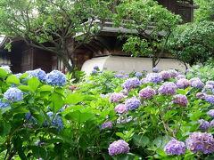 白山神社のあじさいまつりへ行ってきました!