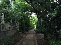 朝の散歩 蛇崩川緑道