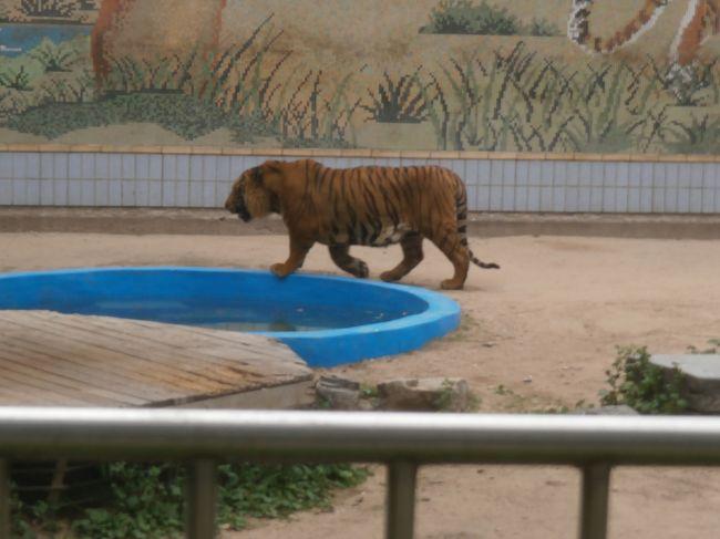 大邱の一週間 ⑧ 動物園と頭流公園、帰国