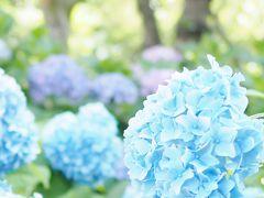 第2弾 府中市郷土の森博物館へGO! やや咲き始めで白が中心  in TOKYO