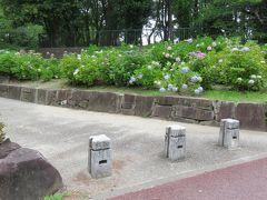 2018梅雨、鶴舞公園の花(8/8):6月10日(8):あじさいの散歩道、西洋アジサイ、額紫陽花、アメリカデイゴ、アカンサス