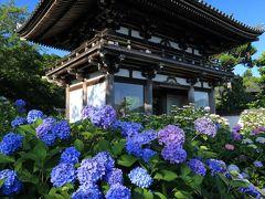 京都 紫陽花めぐり~丹州觀音寺、東光院