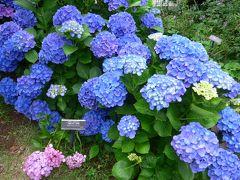 紫陽花の花とバラの花咲く横浜イングリッシュガーデンに行って来ました!! *(^-^)*