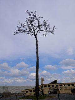 7年ぶりの石巻など被災地の訪問6-陸前高田奇跡の一本松,BRT盛駅,BRT陸前高田駅の周辺