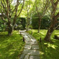 晩夏の京都ひとり旅【11】四日目・朝の伏見稲荷参拝から市内を横断して苔寺と地蔵院