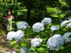 常楽寺のアジサイ_2018_見頃過ぎですが、花は残っています。(群馬県・太田市)