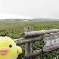 北海道 雨竜沼湿原 と 東川町を たびするトリ