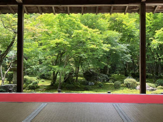 週間天気予報でも雨の日が多い梅雨の京都ですが、梅雨の晴れ間を狙って圓光寺と詩仙堂に行ってきました。