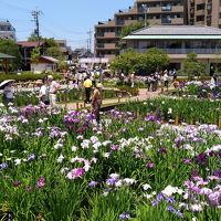 菖蒲をみにいこう 〜堀切菖蒲園と堀切水辺公園