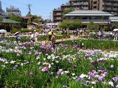 菖蒲をみにいこう ~堀切菖蒲園と堀切水辺公園