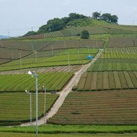 九州オルレ・八女コースを歩き、温泉&地ビールで〆る