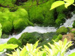 緑のパムッカレ 穴地獄