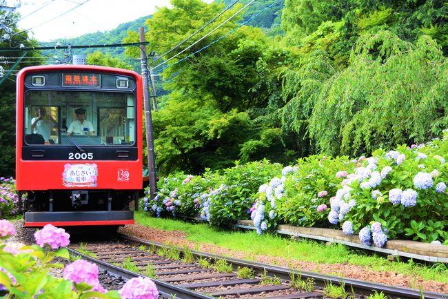 絶景の登山列車を楽しんだ<br />スイス帰りの週末に<br />東京出張が入りました (*^^)v<br />あじさいが咲いている季節だし<br />登山電車つながりということで、<br />ここはひとつ、箱根に行ってみよう~♪<br />・・・<br />写真は、<br />箱根登山鉄道/大平台駅近辺です。