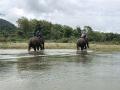 2018年GW ハノイ&ルアンパバーン 9日間の旅 ⑧ルアンパバーン最終日、象とふれ合う