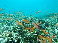 初めまして西表島(*´з`) 弾丸で海とサガリバナを愛でる旅