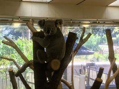 コアラが可愛い金沢自然公園