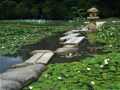 2018年6月 山口・宇部市 常盤公園のしょうぶ苑で菖蒲と紫陽花と睡蓮を見ました。