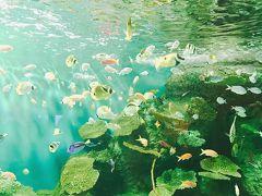しながわ水族館ってこんなに生き物がいたの!&京浜島つばさ公園で飛行機を楽しむ