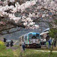桜の咲き誇る三江線 2018 ~引退2日前~(島根県川戸)