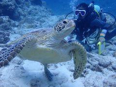 夏リゾート沖縄(9)慶良間諸島ダイビング。美しいケラマブルーの海に抱かれて。今度はアオウミガメが泳いで行きました
