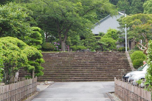 神奈川県鎌倉市岩瀬1464<br />2017.6.28 <br /><br />旅日記のタイトルが 大げさ!だったかな。<br /><br />まず お寺さんへ訪れてびっくりするのが<br />この階段なんです。<br /><br />横に10メートル位あるかな?<br /><br />横に 長ーい幅で作られています。<br /><br />こちらは<br />浄土宗 ご本尊さまは 阿弥陀如来 室町時代の作<br /><br />開基 北条綱成<br /><br />近くには 北条氏拠点とする玉縄城がありました。<br /><br /><br />徳川家康との関わり・・・<br /><br /><br />豊臣秀吉の小田原征伐が始まり、<br />周囲は 徳川家康に包囲されてしまいます。<br /><br />この近くも家康勢の現地調達で食料などが召し上げられてしまい<br /><br />農民の食べる物等が無くなってしまい<br />困り果てていた。<br /><br />その際 こちらの寺の住職が北条氏を説得し、開城させた!<br />と言うから びっくりです!<br /><br />中興の祖「暁誉源栄」(4代住職)は<br /><br />岡崎の松平家菩提寺「大樹寺」で修行をしていた為<br /><br />家康公とは 大変親しい関係にあったんですって。<br /><br />家康が江戸に入城した後も<br /><br />家康公が通りがかった際には<br />藤沢まで家康公に会いに行ったりしていたそうな!<br /><br />そして ご住職と家康との交流が続き<br /><br />徳川家が菩提寺を「増上寺」に変えた際には、<br /><br />家康公とその父松平廣忠の位牌を作らせて貰ったと言うことです。<br /><br />家康公と父 宏忠の二人の位牌をお祀りしてあるのが「宝蔵」と言うことです。<br /><br />家康が死去する際には<br />駿府に呼ばれ、その遺言を受けました。<br /><br /><br />なんとまあ! <br />鎌倉にも 沢山の 徳川家との 繋がりのある場所が<br />沢山あるのですねえ。<br /><br />お庭は 手入れがされており<br />気持ちの良い 境内でした。<br /><br /><br /><br /><br />