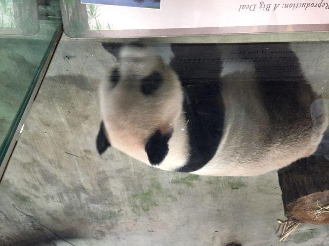 2018/6/18~21、scootを利用して、台北へ女子一人旅をしました。