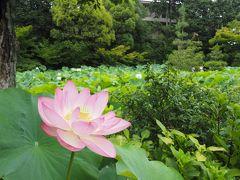 京で蓮ということで、その1.法金剛院