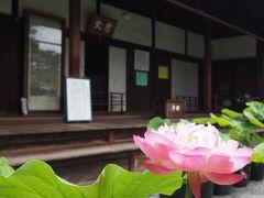 京で蓮ということで、その2.妙心寺退蔵院