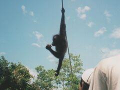 2002年のボルネオ(コタキナバル)家族旅行