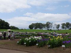 札幌、八紘学園の菖蒲園を見に行った。