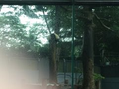 ジャイアントパンダに会いたい♪はじめまして!シャンシャン&シンシンママ