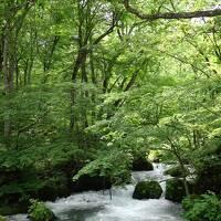 夏の八甲田・奥入瀬旅行。感動的な自然、美味しい食事を満喫 2日目 とても美しい緑に包まれた奥入瀬渓流と酸ヶ湯温泉の千人風呂(2018年7月)