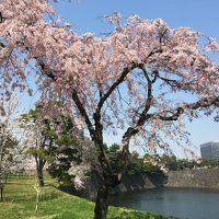 春の皇居乾通り一般公開で皇居の桜を満喫。