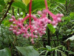 コタキナバルの植物