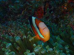 夏リゾート沖縄(22)残波岬そしてラストダイビング。アディショナルタイムにホイッスル!