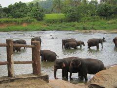 スリランカ7日間の旅・6・ピンナワラのゾウの孤児院からコロンボへ