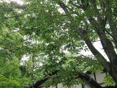 夏休み 東京旅行 1日目  吉祥寺&深大寺・鬼太郎茶屋