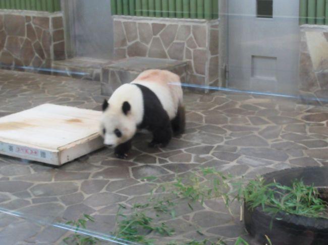 神戸、王子動物園、布引ハーブ園。