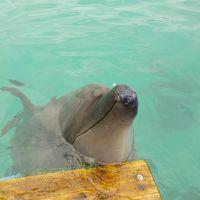 イルカに触れたい娘と行く「初・八重山諸島」