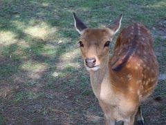 行きたいとこに全部行く脅威の夏休み①【奈良です鹿です暑いです8/11PM】