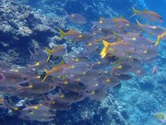真夏の石垣島(9)黒島ダイビング・魚の群れにまみれ「秘密のオアシス」では小さい魚たちから目が離せないっ!
