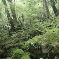 屋久島:白谷雲水峡(苔むす森)  後編