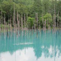 初夏の北海道旅行・4日目・富良野のラベンダーと美瑛をドライブ