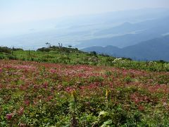 夏の伊吹山で花を楽しむお手軽ハイク