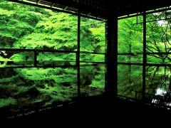 青もみじを求めて京都ひとり旅 (2)念願の瑠璃光院と雨煙る緑の大原